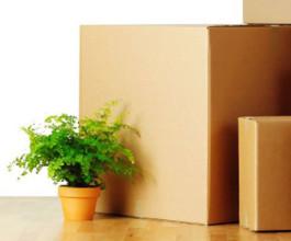 Как правильно перевозить комнатные растения