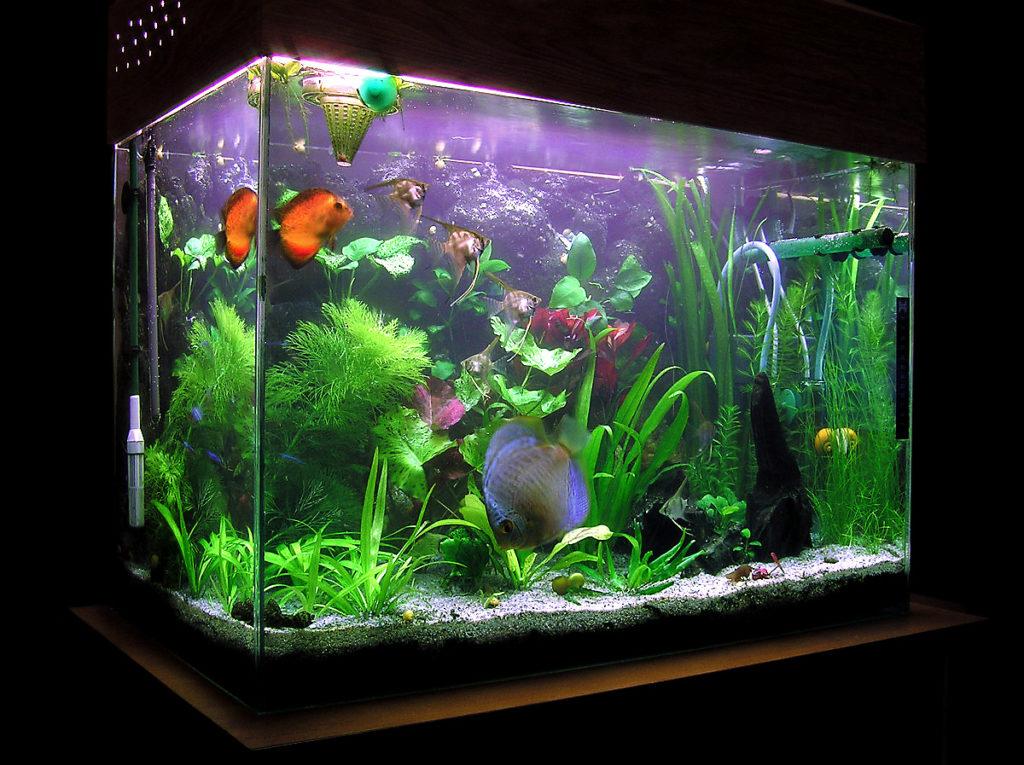 Специфика перевозки аквариума и его обитателей