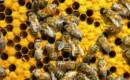 Перевозка пчел